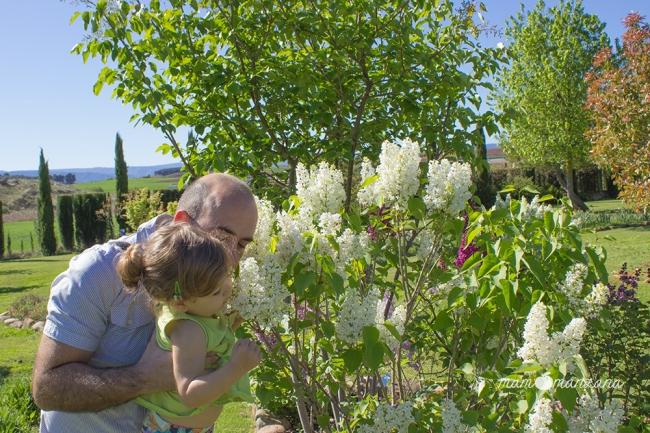 Emma oliendo lilas blancas en el Botánico